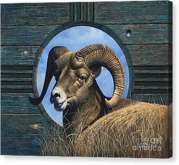 Mountain Goat Canvas Print - Zia Ram by Ricardo Chavez-Mendez