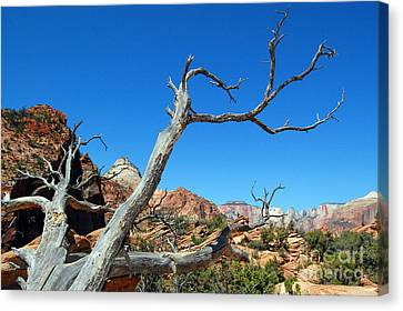 Zion Reaching Tree Canvas Print