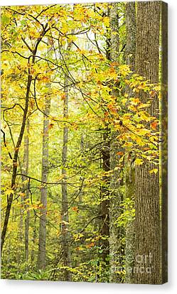 Autumn Monongahela National Forest Canvas Print by Thomas R Fletcher