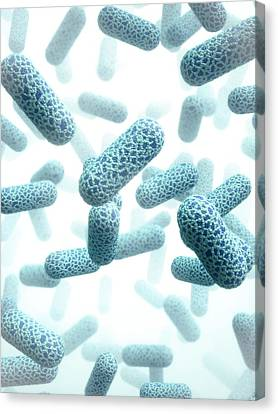 E. Coli Bacteria Canvas Print