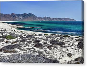 Isla De Espiritu Santo, Baja, Mexico Canvas Print by Mark Williford