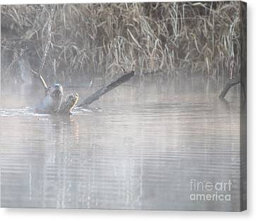 Northern River Otter Canvas Print