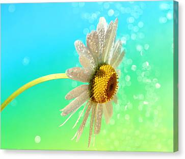 Still Life Canvas Print by Heike Hultsch