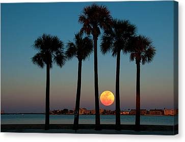 2011 Supermoon Canvas Print by Carolyn Dalessandro