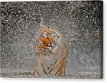 Wow Canvas Print - 2012 Nat Geo Photo Contest Winner by Ashley Vincent