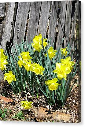 2014 Spring In South Canvas Print by Matthew Seufer
