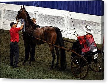 Pleasure Driving Canvas Print - Winner 2014 Wchs - Louisville Ky  Asb Adult Show Pleasure Driving by Thia Stover