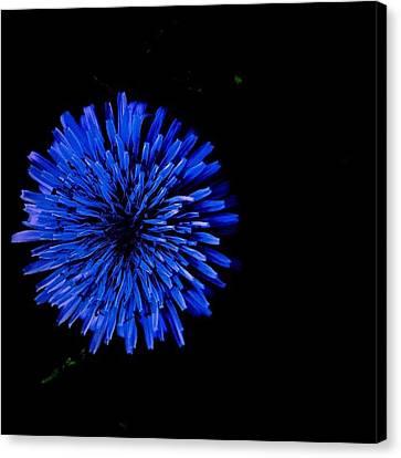 Still Life Canvas Print - Illumination Flower by Brandon McKenzie