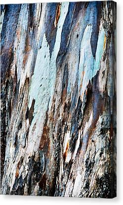 20150216181150fla3699c1p Canvas Print