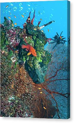 Coral Reef Canvas Print by Georgette Douwma