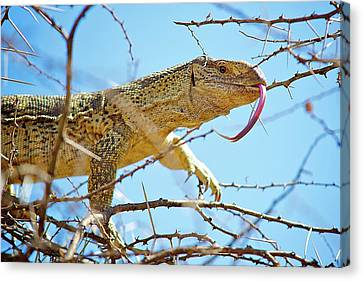 African Reptiles Canvas Print
