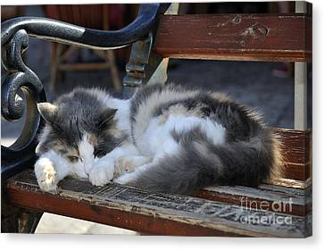 Cat In Hydra Island Canvas Print