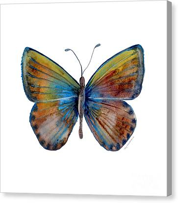 22 Clue Butterfly Canvas Print by Amy Kirkpatrick