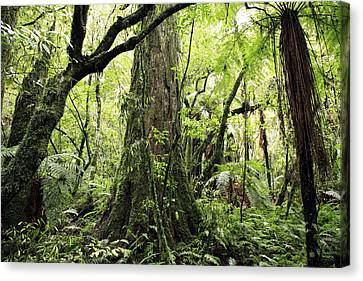 Jungle Canvas Print by Les Cunliffe