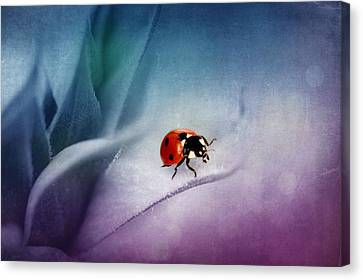Ladybug Canvas Print by Heike Hultsch