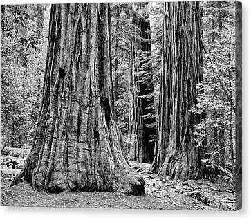 Usa, California, Yosemite National Park Canvas Print by Jaynes Gallery