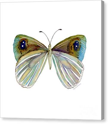 23 Blue Argyrophenga Canvas Print by Amy Kirkpatrick
