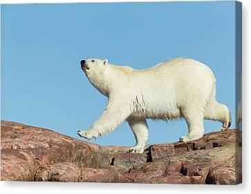 Canada, Nunavut Territory, Repulse Bay Canvas Print by Paul Souders