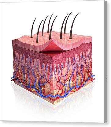 Human Skin Canvas Print by Pixologicstudio