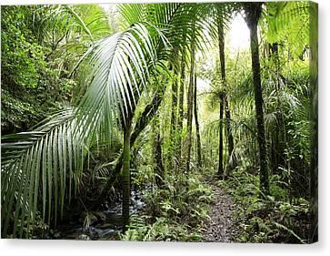 Jungle Canvas Print by Les Cunliffe
