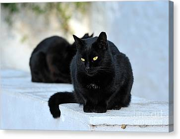 Cat In Hydra Island Canvas Print by George Atsametakis