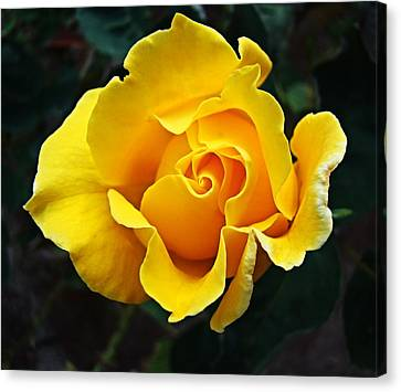 Canvas Print featuring the photograph 24 Karat by Nick Kloepping