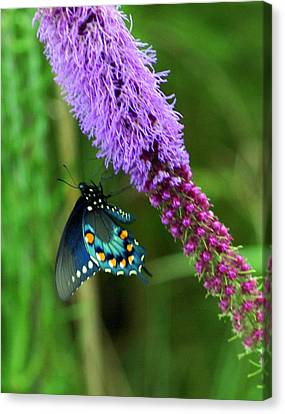 243 Butterfly Canvas Print by Marty Koch