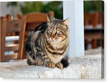 Gulf Canvas Print - Cat In Hydra Island by George Atsametakis