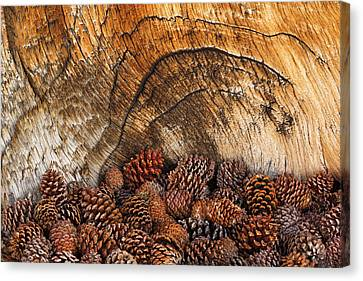 Usa, California, Inyo National Forest Canvas Print