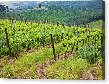 Europe, Italy, Tuscany Canvas Print by Terry Eggers