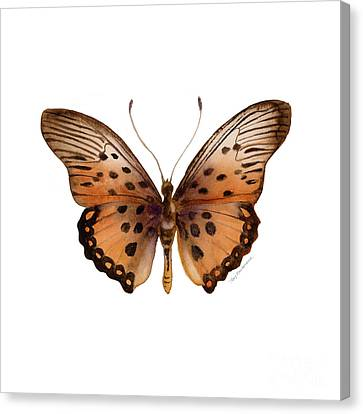 26 Trimans Butterfly Canvas Print by Amy Kirkpatrick