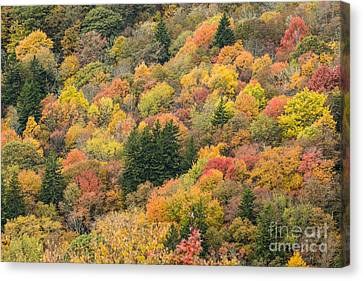 2682 Blue Ridge Parkway Canvas Print