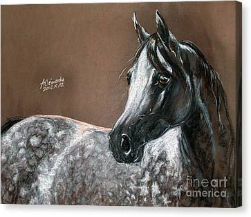 Arabian Horse Canvas Print by Angel  Tarantella
