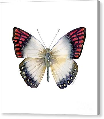 27 Magenta Tip Butterfly Canvas Print by Amy Kirkpatrick
