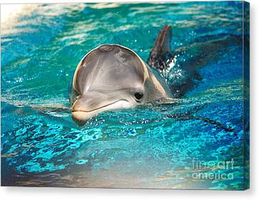 #285 Dolphin Keep Smiling Sunny Happy Photography Canvas Print by Robin Lee Mccarthy Photography