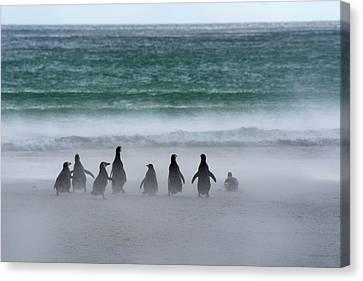 Falkland Islands Canvas Print
