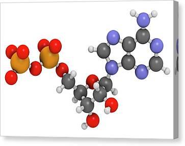 Adenosine Diphosphate Molecule Canvas Print by Molekuul