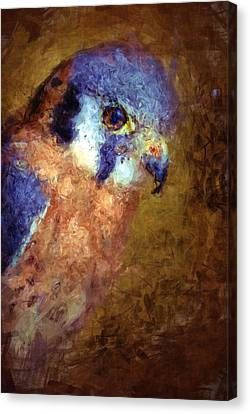American Kestrel Falco Canvas Print by Robert Jensen
