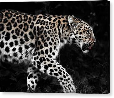 Leopard Canvas Print - Amur Leopard by Martin Newman