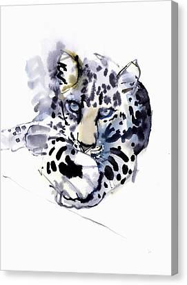 Arabian Leopard Canvas Print by Mark Adlington