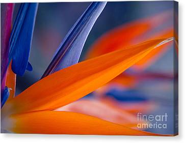 Canvas Print featuring the photograph Art By Nature by Sharon Mau