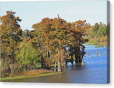 Atchafalaya Basin In Louisiana Canvas Print