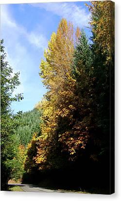 Autumn 2 Canvas Print by J D Owen