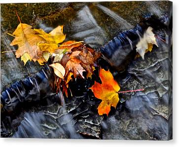 Autumn Leaves Canvas Print by Frozen in Time Fine Art Photography
