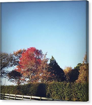 Autumn Canvas Print by Les Cunliffe