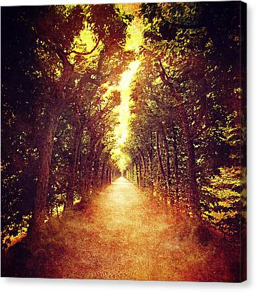 Avenue Trees Canvas Print