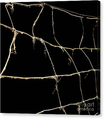 Barbed Wire Canvas Print by Bernard Jaubert