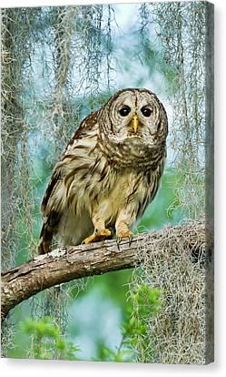 Barred Owl (strix Varia Canvas Print