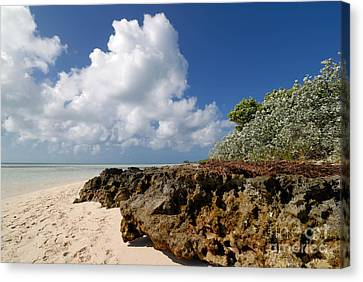 Beach At Coco Cay Canvas Print by Amy Cicconi