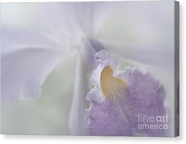 Beauty In A Whisper Canvas Print by Sharon Mau